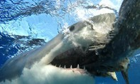 Một thanh niên bị cá mập cắn chết khi lướt sóng ở California