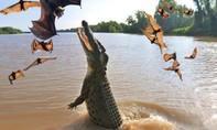 Clip cận cảnh cá sấu bay lên khỏi mặt nước bắt dơi điệu nghệ