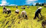 Vĩnh Long đã thực sự cần thiết xây bảo tàng nông nghiệp 400 tỷ đồng?