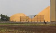 Long An: Cơ sở xay xát lúa gây ô nhiễm môi trường