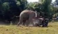 Clip voi rừng tấn công máy kéo để bảo vệ bạn tình