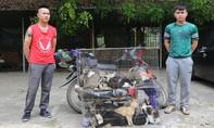 Hai miu tặc bắt trộm gần 100 kg mèo chỉ trong một đêm