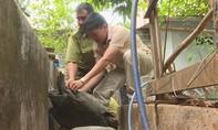 Phát hiện một hộ nuôi 127 cá thể rùa, con lớn nhất nặng 32kg