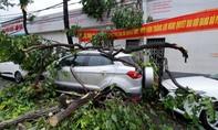 Nhiều ô tô bị cây ngã đè trong mưa