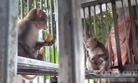 Tịch thu 153 cá thể động vật hoang dã