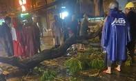 Cành cây gãy trong mưa đè người đi đường tử vong tại TP.HCM
