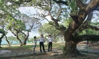 Những cây di sản Việt Nam ở Trường Sa