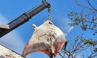 Ngư dân La Gi bắt được cá đuối nặng hơn 800kg