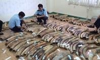 Nhận 48 năm tù vì buôn bán động vật hoang dã trái phép