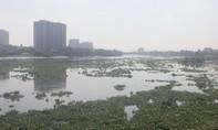 """Lục bình """"bức tử"""" sông Sài Gòn"""