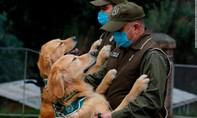 Chile muốn huấn luyện chó đánh hơi phát hiện người nhiễm nCoV