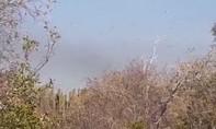 Clip đàn châu chấu khổng lồ 'tấn công' Argentina