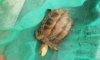 Người dân bỏ tiền giải cứu rùa hộp trán vàng rất quý hiếm