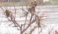 Video giải cứu bầy khỉ mắc kẹt giữa sông