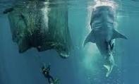 Cận cảnh ngư dân cho đàn cá khổng lồ dài 20m ăn