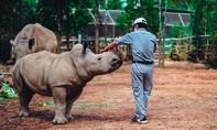 4 tê giác con chào đời trong vòng 16 tháng tại Vinpearl Safari