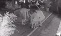 """Camera """"tố"""" 3 người đàn ông đi ôtô bê trộm chậu hoa giấy"""