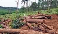 Lâm Đồng: Xử lý nghiêm vụ phá rừng làm nhà trái phép ở huyện Bảo Lâm