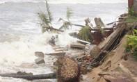 Bờ biển TP.Hội An tiếp tục sạt lở nghiêm trọng do bão số 5
