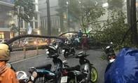 TPHCM: Mưa lớn, cây xanh cổ thụ ven đường bật gốc đè thanh niên nhập viện
