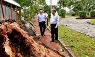 """Gió cấp 8 """"thổi bay"""" 50 tỷ đồng thiệt hại cây xanh tại Huế"""