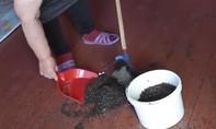 Clip cảnh tượng người dân Nga quét cả bao tải ruồi mỗi ngày