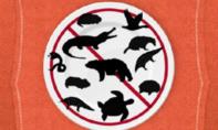 Trung Quốc cảnh báo dân không ăn thịt động vật hoang dã dịp Tết