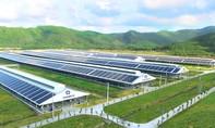 Triển khai năng lượng mặt trời trên toàn hệ thống trang trại Vinamilk