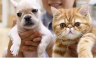 Nga đăng ký bằng sáng chế vaccine COVID-19 dùng cho động vật
