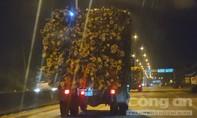 """Khiếp sợ những """"hung thần"""" chở gỗ, dăm ở Quảng Ngãi, Quảng Nam"""