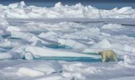 Phát hiện gây choáng: Bắc Cực ấm lên nhanh gấp 3 lần so với toàn cầu