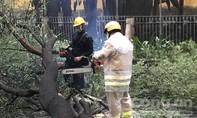 TPHCM: CSGT kịp thời xử lý cây xanh đổ trên đường khu trung tâm sau mưa