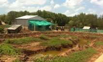 Bài 1: Buồn xo nuôi tôm dưới tán rừng
