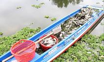 Điều tra nguyên nhân cá chết trắng trên hồ Từ Vân