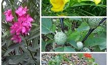 TP.HCM phòng ngừa ngộ độc do một số loại cây, hoa trong khuôn viên trường học