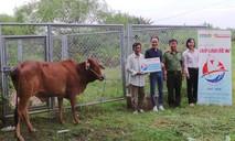 Tặng bò và máy nổ cho gia đình nghèo quận 9