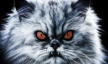 Vi khuẩn gây bệnh cho mèo có thể khiến con người điên loạn