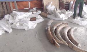 TP.HCM: Tạm đình chỉ điều tra 4 vụ buôn lậu ngà voi ở cảng Cát Lái