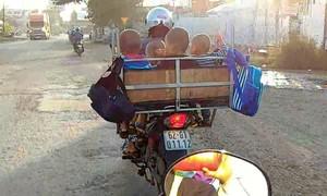 Clip một người chở 4 trẻ em đầu trần trong lồng sắt chạy bon bon trên đường