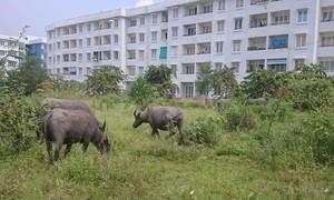 TP.HCM: Dư thừa 14.000 căn hộ, nền đất tái định cư, xử lý ra sao?