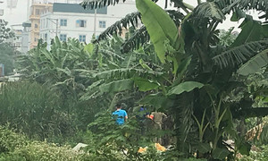 Phát hiện thi thể cháy xém trong vườn chuối