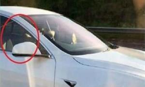 Chủ xe Tesla bị phạt nặng vì để xe tự lái mà không giám sát