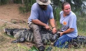 Dắt chó đi dạo, bị cá sấu dài gần 4m nuốt chửng