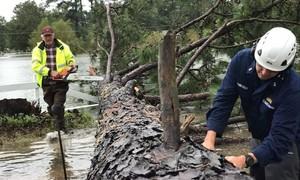 Mỹ bắt nhóm cướp lợi dụng bão Florence để 'hôi của'