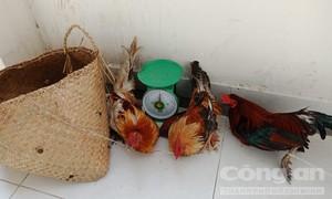 Đột kích trường gà ở Sài Gòn, con bạc nháo nhào tháo chạy