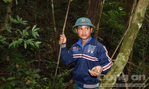 Lên rừng tìm món ốc núi trứ danh ở Tây Nguyên