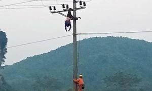 Người tâm thần tử vong thương tâm do trèo cột điện cao thế