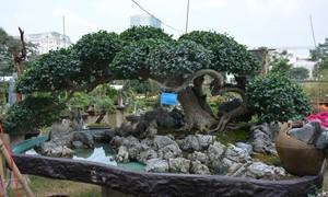 """Nhiều cây cảnh """"độc"""" tại Hội hoa xuân Phú Mỹ Hưng"""
