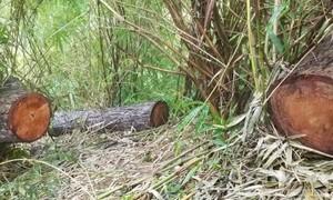 Vụ khai thác gỗ gần 2 chốt bảo vệ rừng: Phát hiện 3 điểm phá rừng
