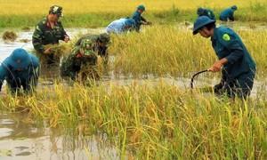 """Đồng bằng sông Cửu Long: """"Thất thủ"""" trong biển nước"""
